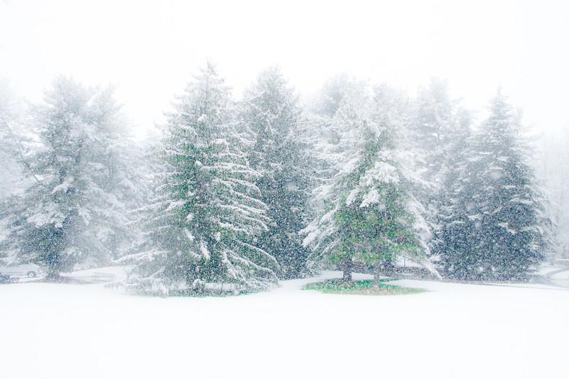 Ambler Snow-1759.jpg