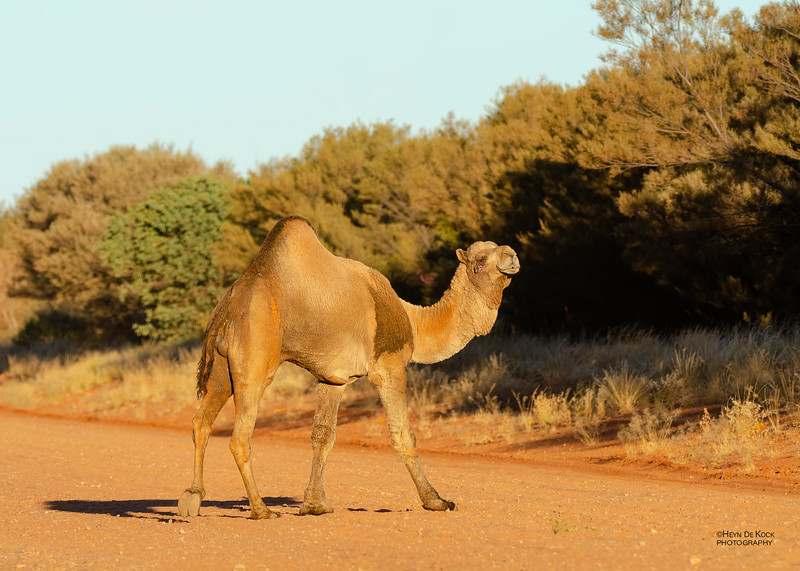 One-humped Camel, Newhaven Station, Jun 2012-1.jpg