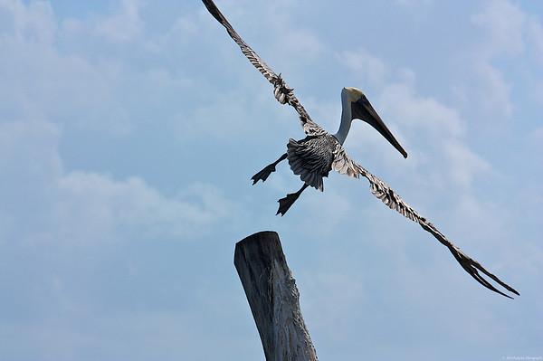 2009 Cancun Pelicans, etc.