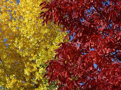 Fall, 2014