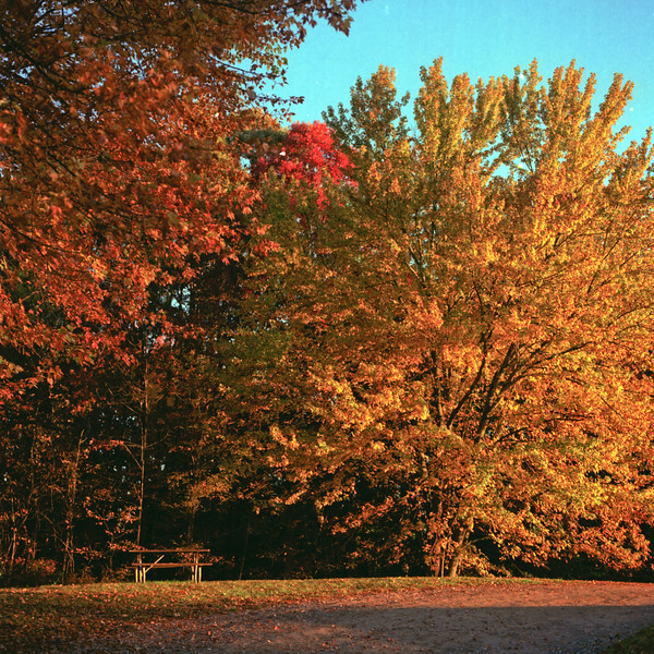 Autumn Hike 120 Film-00009.jpg