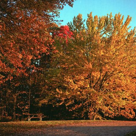 Buell Lake County Park Medium Format Film