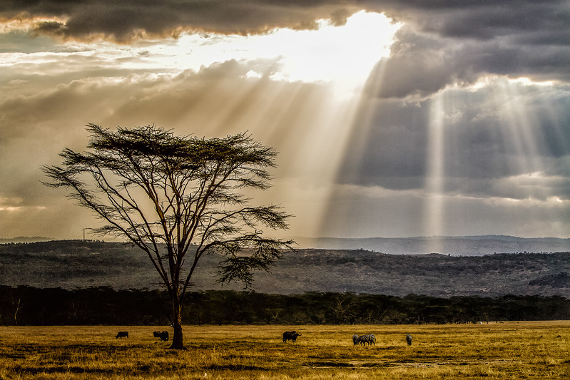Lake Nukuru savannah