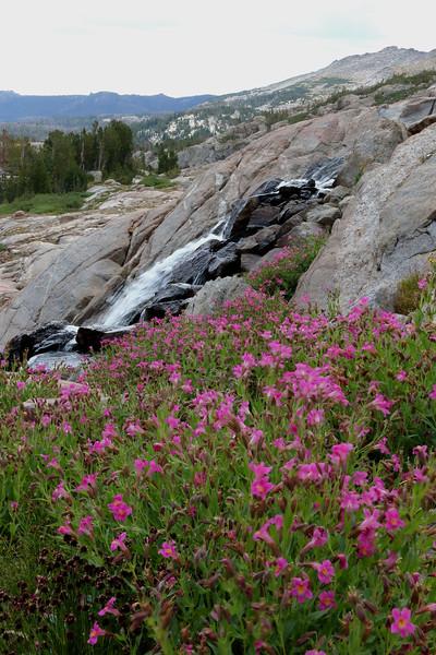 Atlantic Creek waterfall and monkey flower.jpg