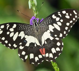 2019-06-26-Niagara-Butterflies