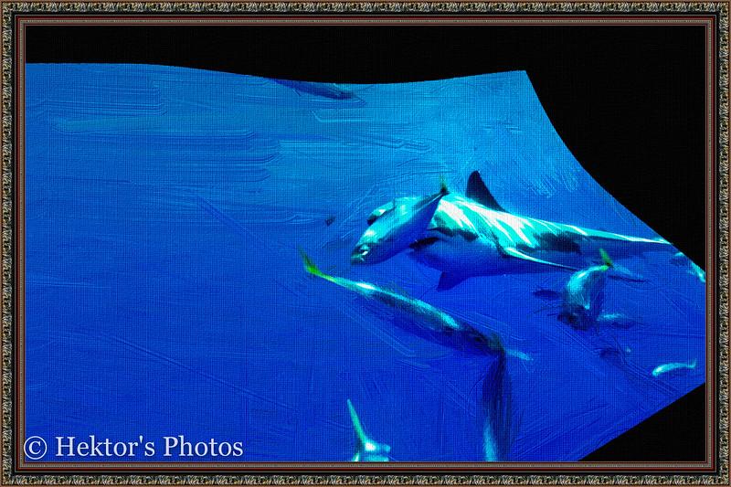 acquarium-27.jpg