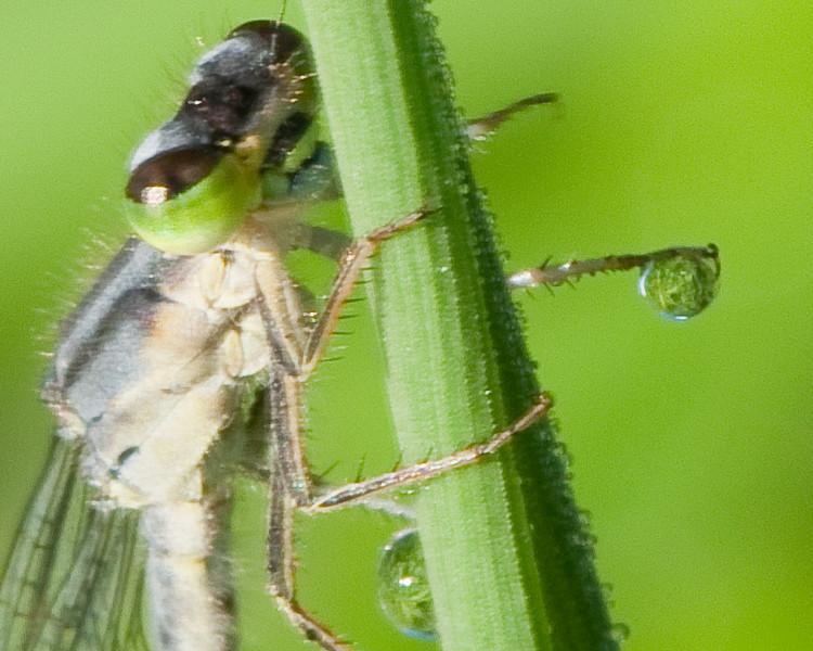 Dragon fly-7.jpg