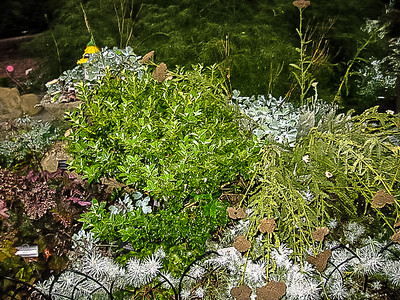 Meadowlark Gardens (Declan's Version) -- 7/15/2017