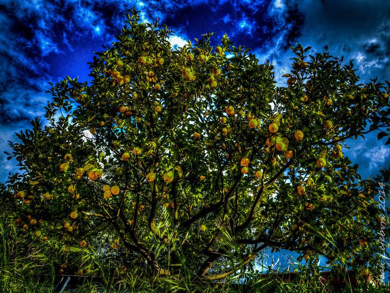 Land of Lemon