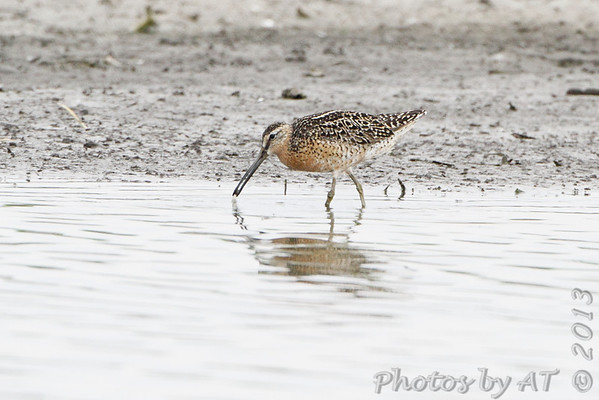 2013-07-17 Riverlands Migratory Bird Sanctuary