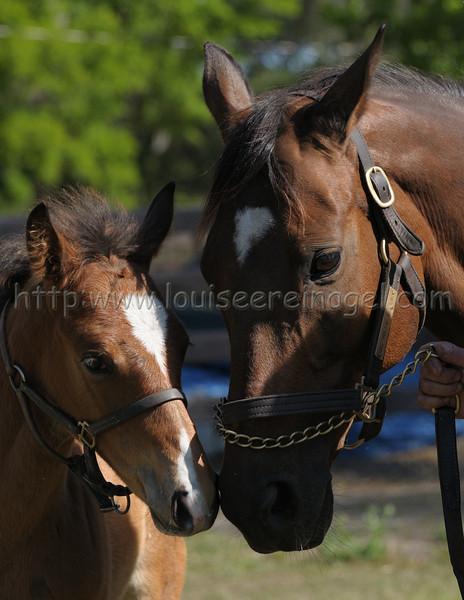 Red Oak Farm 3/24/09;;Sweet Return-Tis Willie Nellie 1/30/09 colt