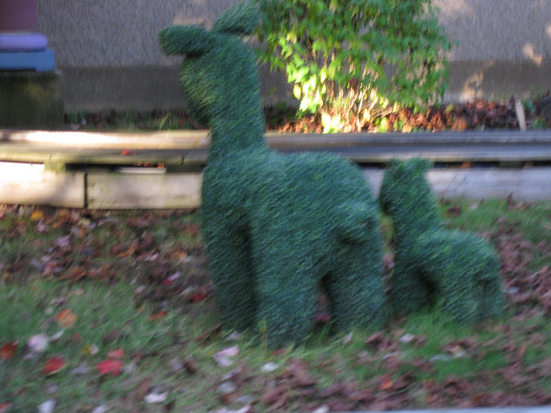 Topiary behind Jr. Sports Cars. (Blurry.)