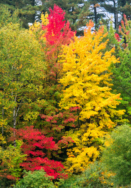 Autumn colours_Oct 5-2012_01.jpg