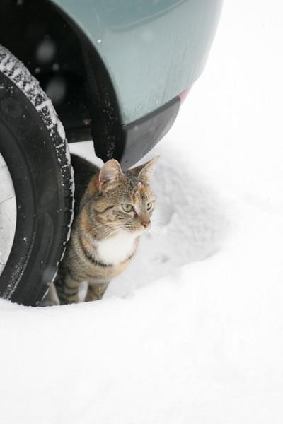 Snow 2010 088.jpg