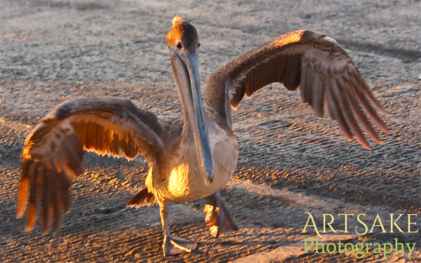 Birds on Amelia Island