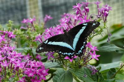Schmetterlingausstellung 2019