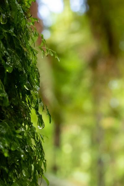 Im Whakarewarewa Forest