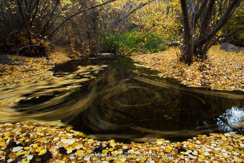 Jump Creek in the Owyhee Desert.