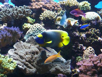 Best of Birch Aquarium