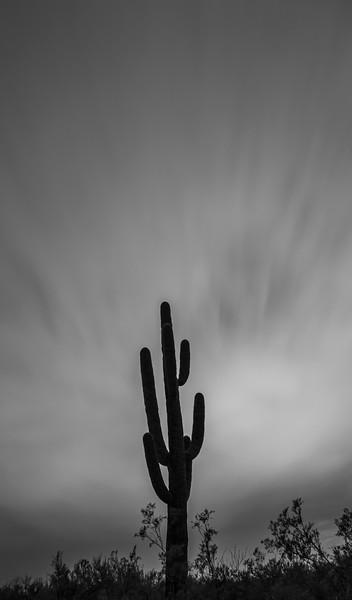 arizona b&w-4.jpg