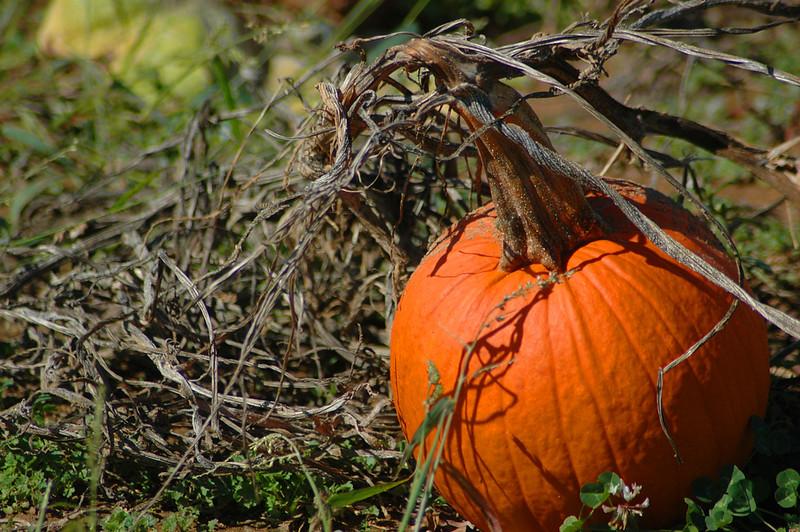one pumpkin.jpg