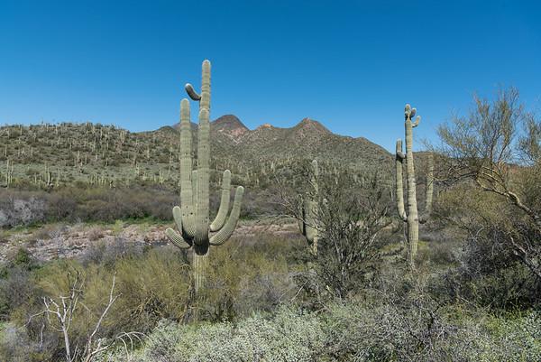 Spur Cross Hike (AZ)