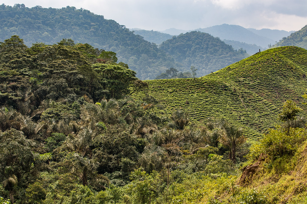 Southern edge of Bwindi Impenetrable National Park, Uganda
