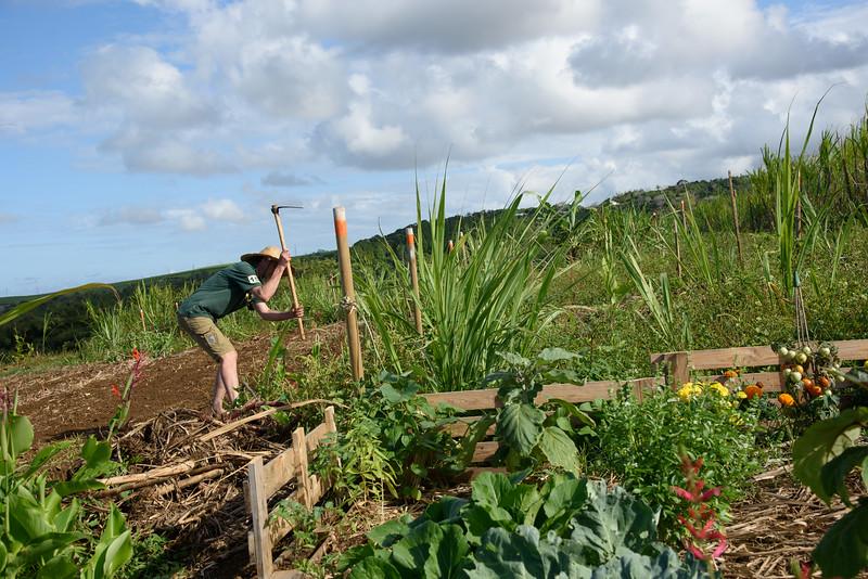 Homme cultivant la terre