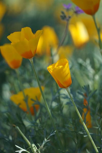 flower-e.jpg
