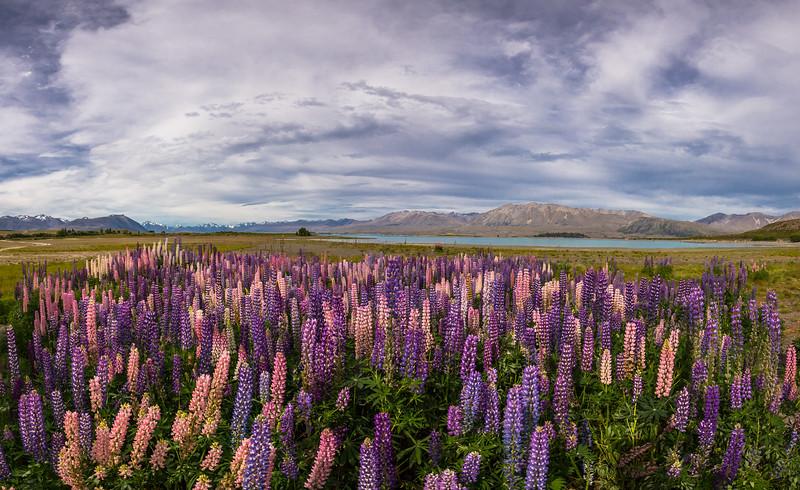 NZ@-0001.jpg