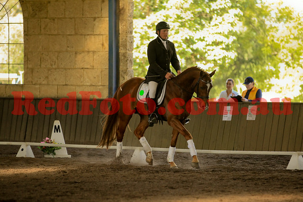 2014 07 19 Swan River Dressage Final Stallion Parade