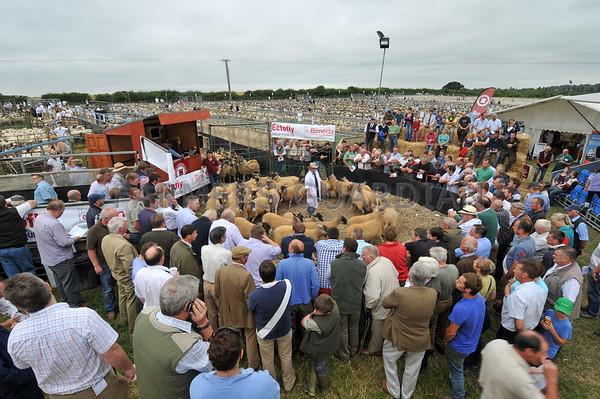 Thame Sheep Fair Aug 2013