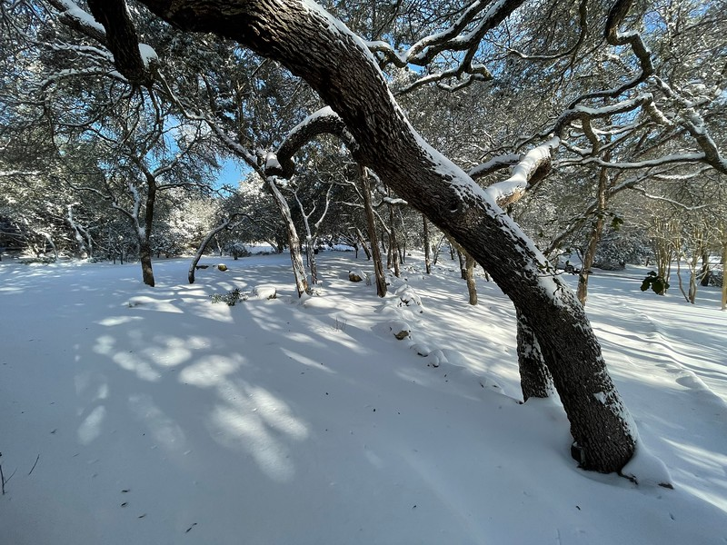 at home -- Austin Winter Storms 2021