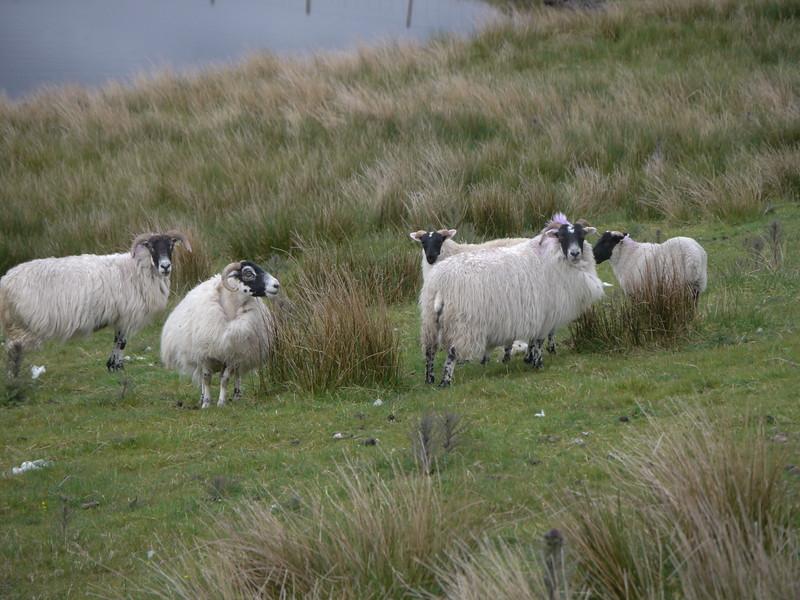 @RobAng Juni 2015 / Leurbost, Harris (Western Isles/Outer Hebridies) /  Sgir'Uige agus Ceann a Tuath nan, Scotland, GBR, Grossbritanien / Great Britain, 45 m ü/M, 2015/06/21 17:25:44