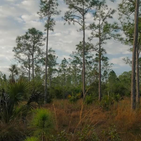 20180201_rpb_royal_palm_beach_pines_jrf_INSTAGRAM.mp4