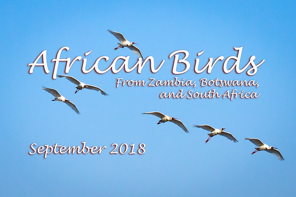 African Birds 2018