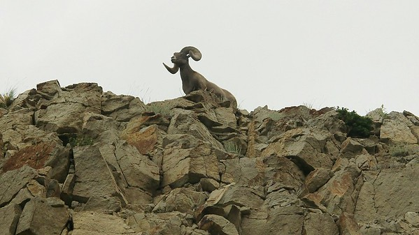 2005-07-31 Yellowstone National Park