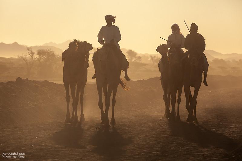 IMG_1174 copy- Camel Race.jpg