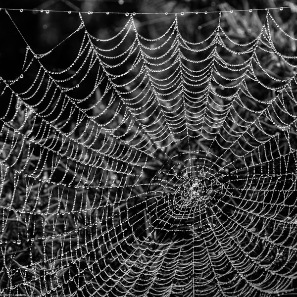 Web and Dewdrops