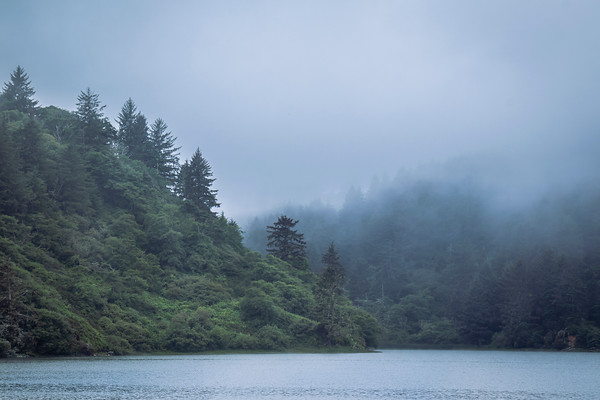 Redwoods and Seaside California