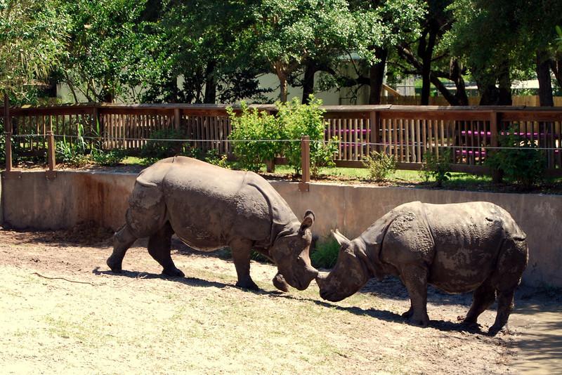 2014 Zoo in Sanford, Florida (12).JPG