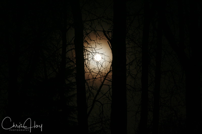 Moon in my trees