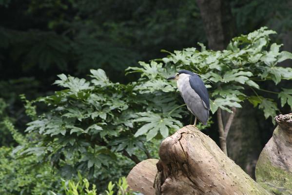 Shanghai Zoo (IV)