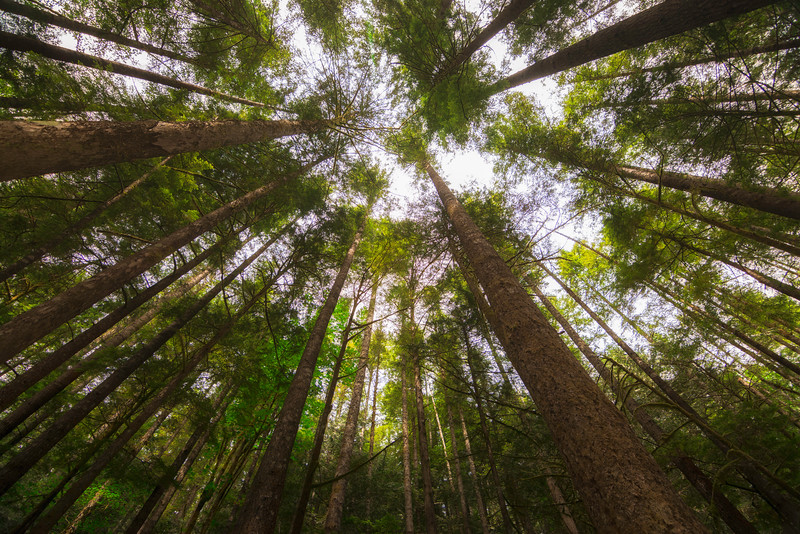 Trees Above.jpg