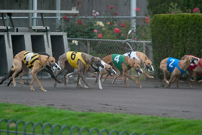 06-11-2004 - Multnomah Greyhound Park