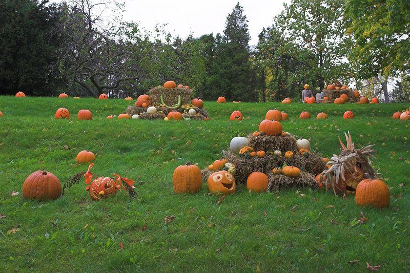 Carved Pumpkin Display