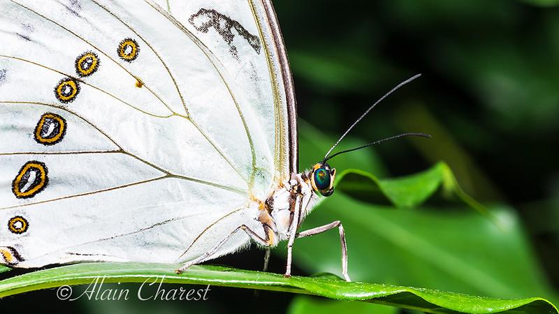 Papillon_f69721760.jpg