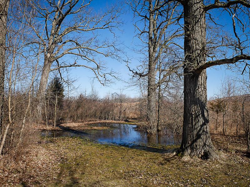Ephemeral Pond in the Last Week of Winter