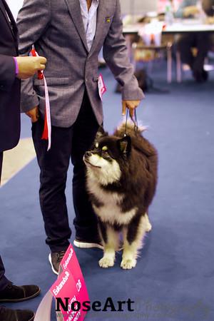 Euro dog show 2013- sneak peak