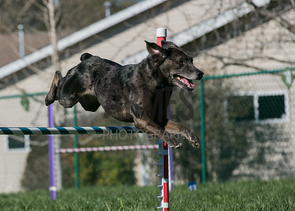 ASCA Agility Trial, 28 March, 2015, Mebane, NC